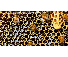 Beneficios de la miel natural de abejas